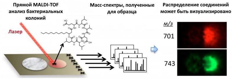 Идентификация микроорганизмов с помощью MALDI-TOF MS